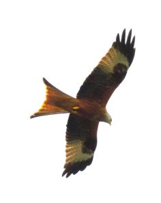 kites-327_dxo