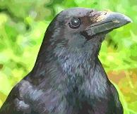fast food raven (2)_FotoSketcher