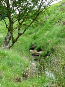 barbrook merin stone beeley derbyshire ani 017