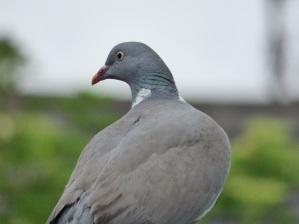 birds test pics 251