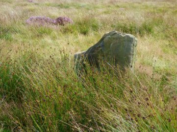 heather 2015 derbyshire, higger tor, beeley circle, edensor, bak 046