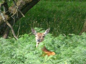 heather 2015 derbyshire, higger tor, beeley circle, edensor, bak 068