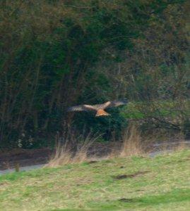 kites 064
