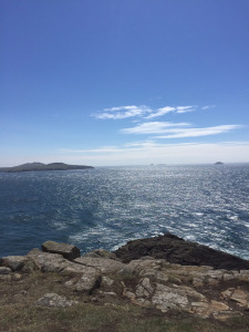 Whispers St David's Headland