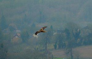 kites 267